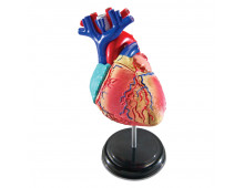 Купить Обучающий набор LEARNING RESOURCES Anatomy Model - Heart LER3332 Elkor