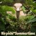 Mūzikas disks KIRPICHI - Summertime
